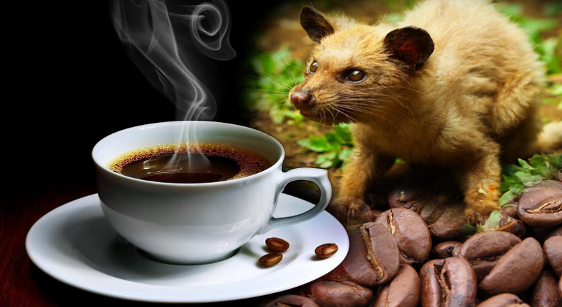 Kopi Luwak – The most expensive coffee