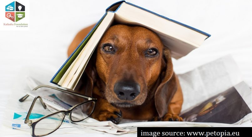 A book is a man's best friend, after a dog